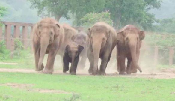 estampida-elefantes