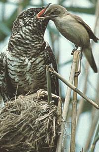 el-nido-del-cuco-L-1